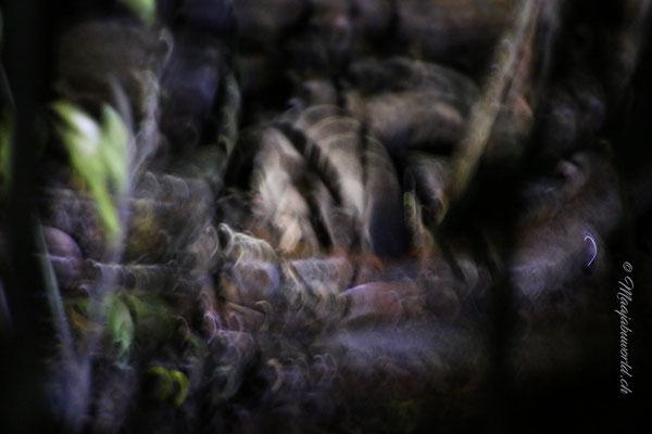 Die Schleichkatze;-) / The civet;-)