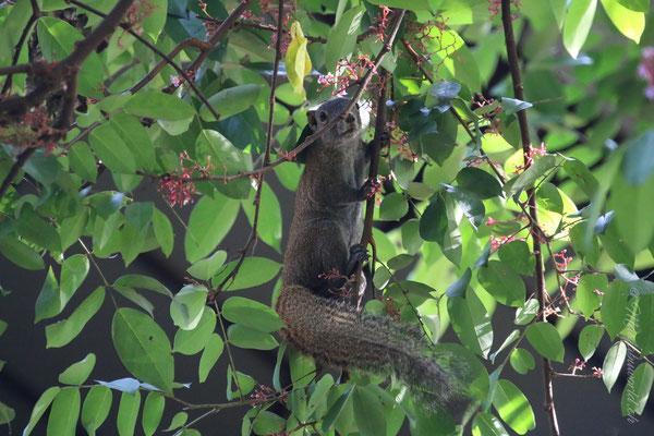 Tiere unserer Hotelanlage / Animals of the Accomoation