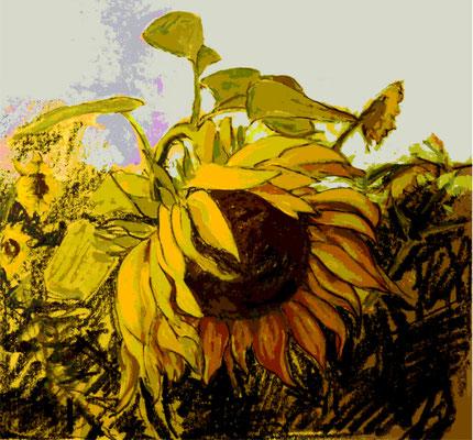 """Sonnenblume"""