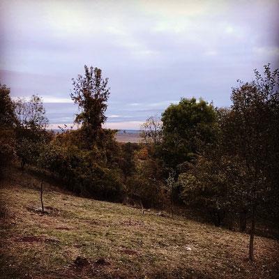 Thüringer Wald, Natur, grün, Entspannung