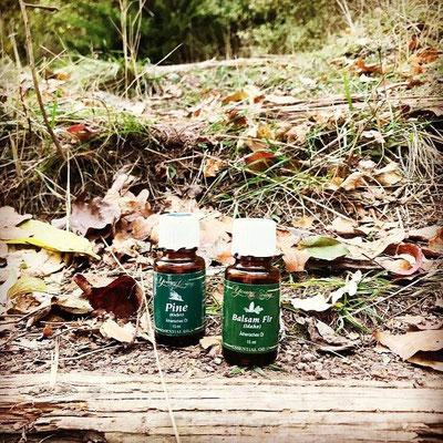 ätherische Öle, Wald