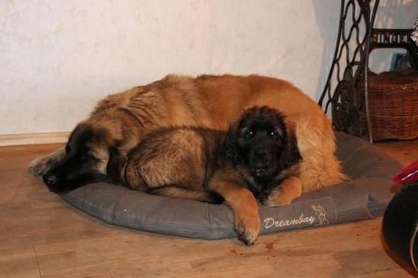 Bond (hellgrün) mit seiner neuen Freundin Shiva