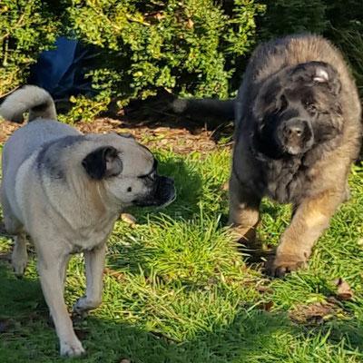 Big Ben (hellblau) mit seiner neuen Freundin Greta