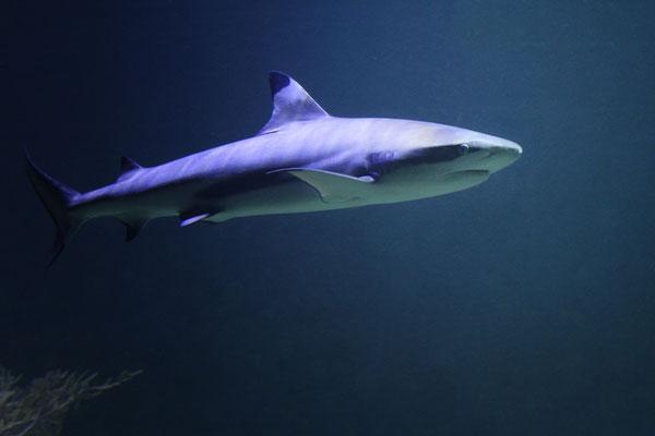 Ulrike Emschermann: Vorsicht Hai