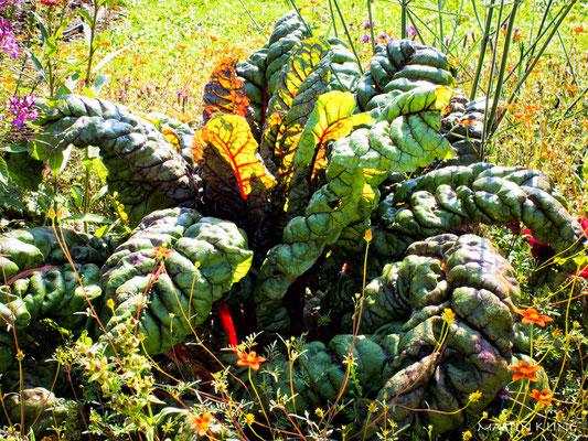 Gemüseschönheit, Martin Kling 2015