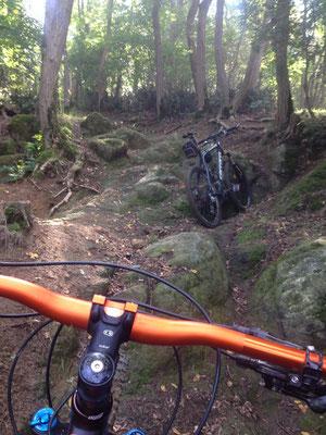 MTB nel bosco