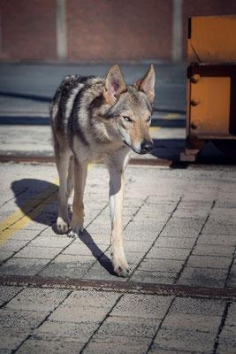 »Wolfshafen« © Ercan Yildirim
