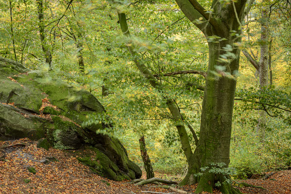 Teutoburger Wald.