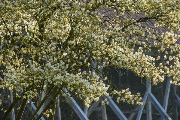 Rheine Bentlage im Frühling