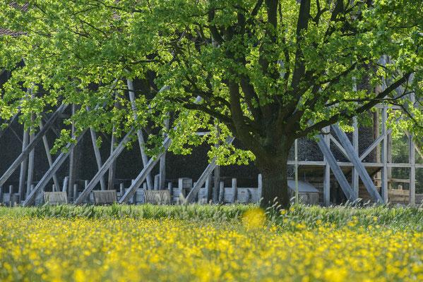 Rheine - Frühling an der Saline Bentlage.