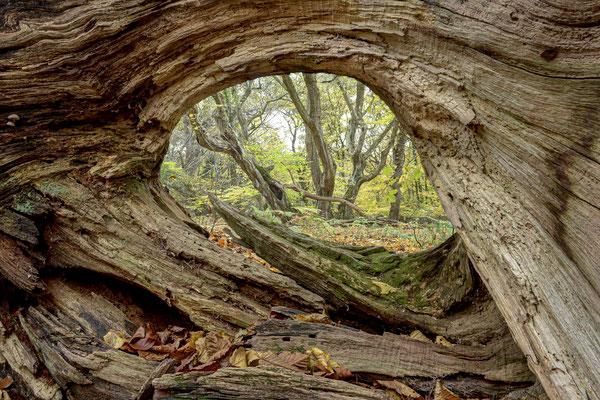 Das Auge des Waldes.