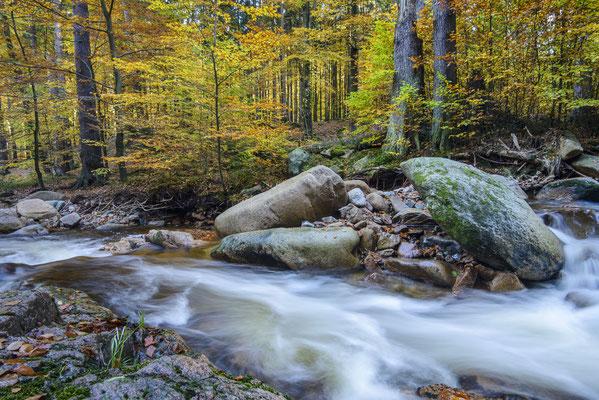 Wasser, Wald, Fels (Ilsetal).