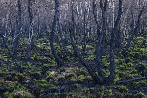 Nach dem Waldbrand
