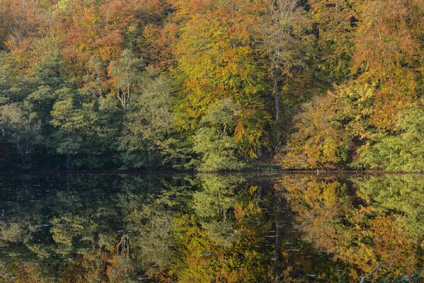 Goldener Oktober am Herthasee, Nationalpark Jasmund, Herbst 2018