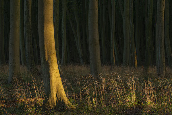 Wald im Nationalpark Jasmund
