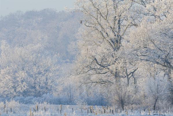 Winter in Nienberge