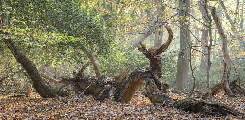 Waldwesen.