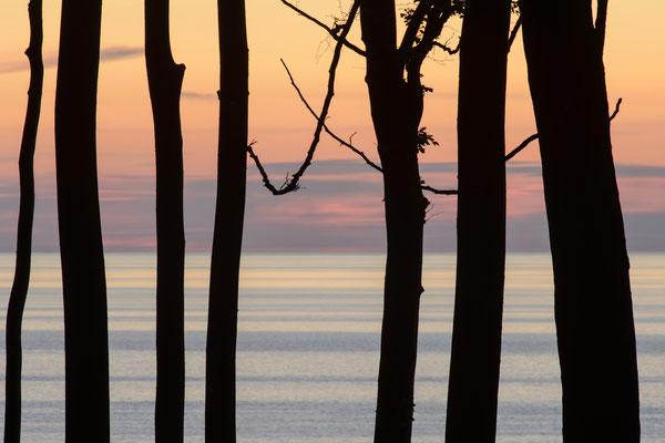 Küstenwald Silhouetten