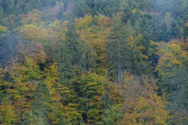 Herbstwald.