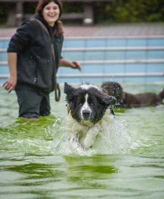 Hundeschwimmen.