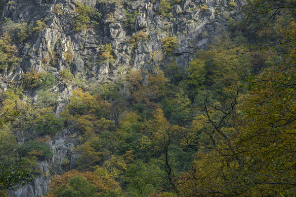 Felsen und Herbstwald.