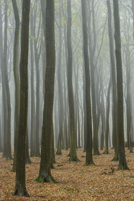 Nebeltag in der Stubnitz