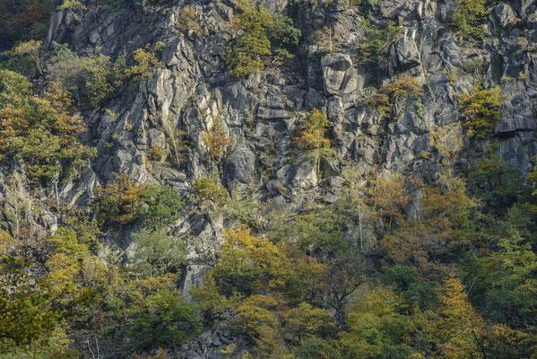 Felsklippen und herbstliche Bäume über dem Bodetal.