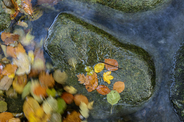 Herbstlaub.