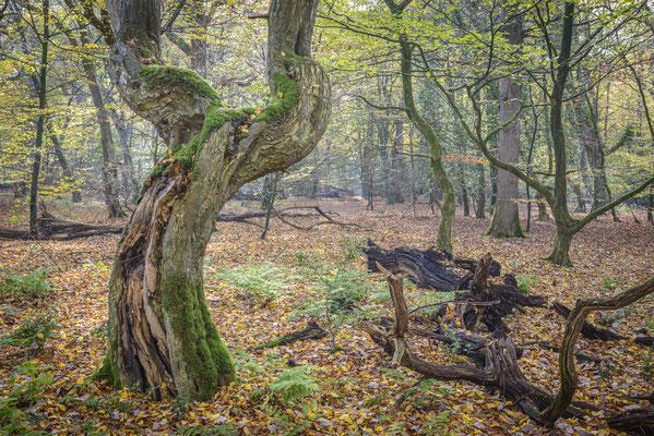 Tanzender Baum.
