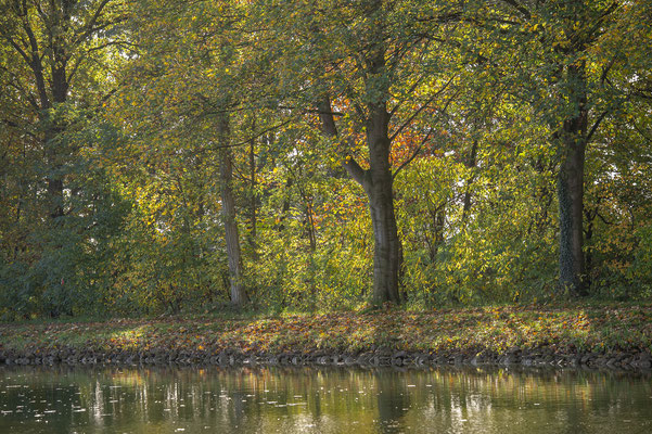 Rheine DEK Leinpfad im Herbst