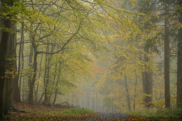 Herbst in der Stubnitz