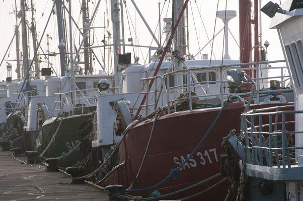 Fischkutter im Hafen Sassnitz