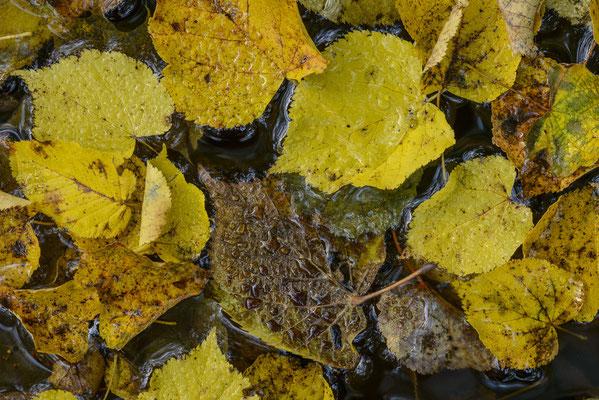 Herbstfarben im Harz.