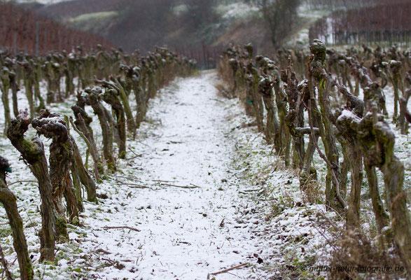 Reben im Winter, Wasenweiler Gewann