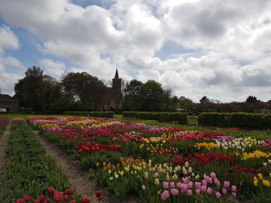 Hortus Bulborum, Limmen