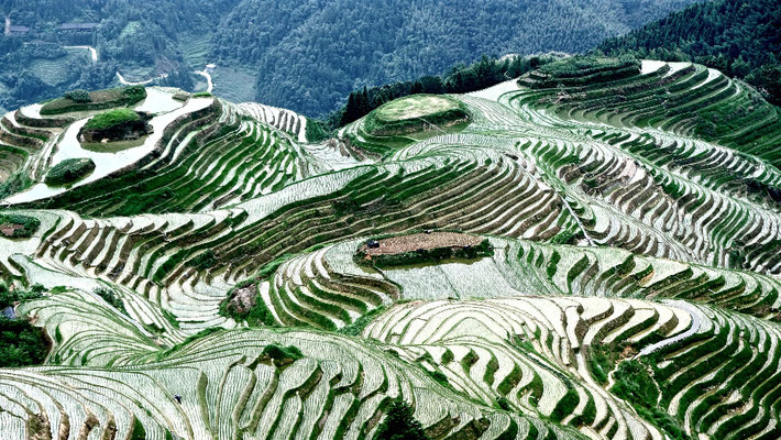 Dragon's Backbone Rice Terraces, Longi Mountain, Guilin, China