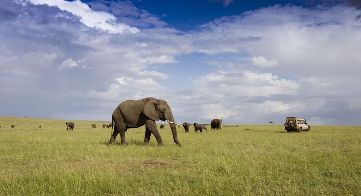 Elefant, Masai Mara, demipress Foto Frauenreisen