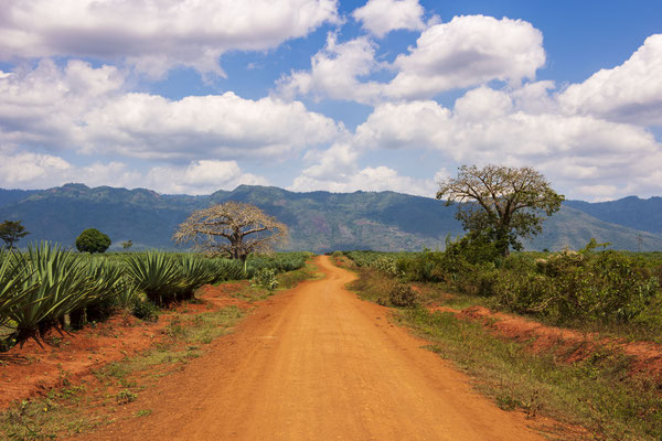 Usambara Berge in Tansania