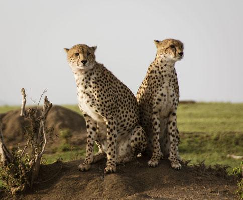 Foto Frauenreise Masai Mara, Kenia