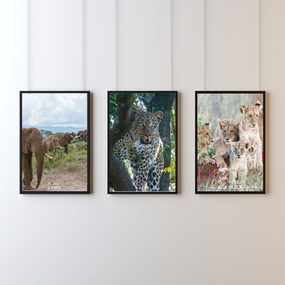 Auf Du und Du mit den Tieren Afrikas