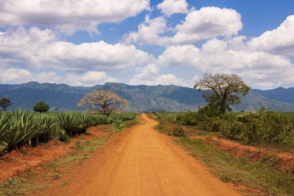 Prints und Leinwand aus Tansania