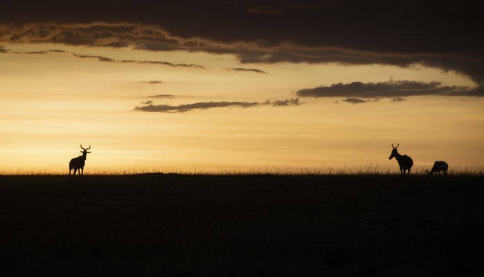 Sonnenuntergang Masai Mara, Kenia