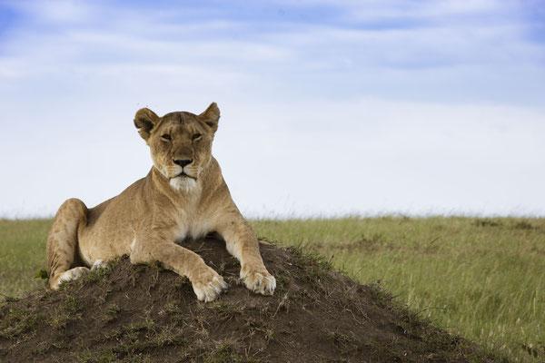 Foto Frauenreise in der Masai Mara, Kenia