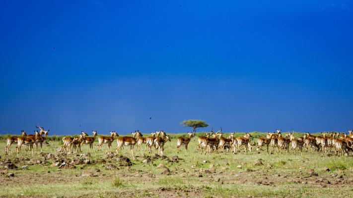 Masai Mara, demipress Foto Frauenreisen