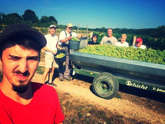 Weinlese Chardonnay 2018