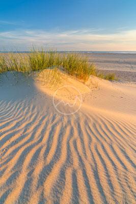 Dünen der Insel Amrum | Ostsee
