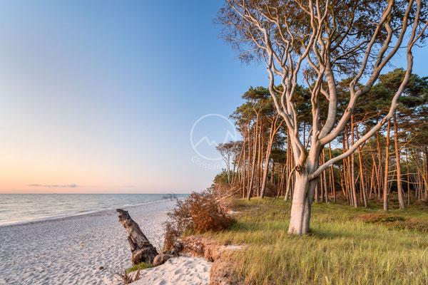 Strand auf Fischland-Darß-Zingst | Ostsee