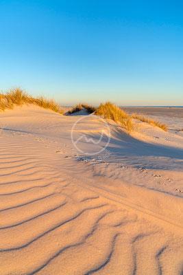 Dünen auf der Insel Amrum | Nordsee
