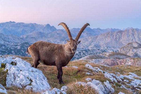 #28 In den Berchtesgadener Alpen