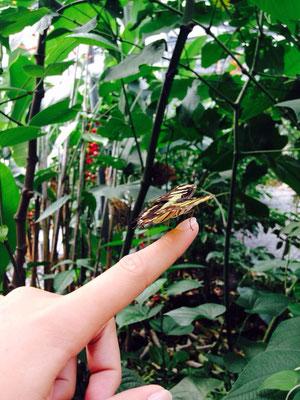 observation faune et flore panama